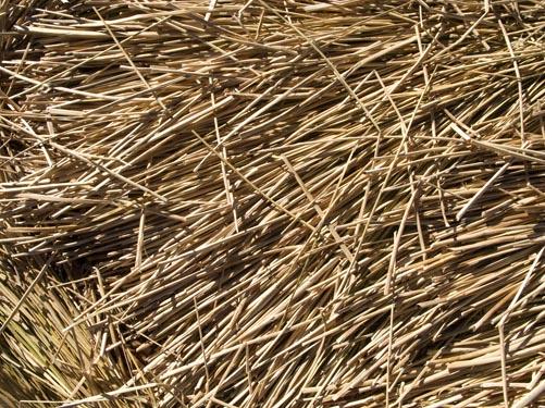 uros reeds
