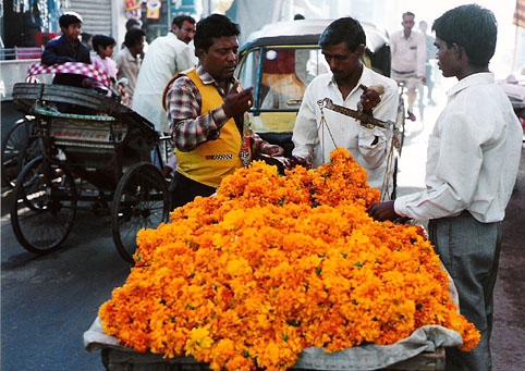 india marigolds