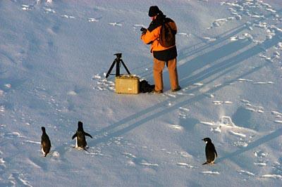 ant penguins